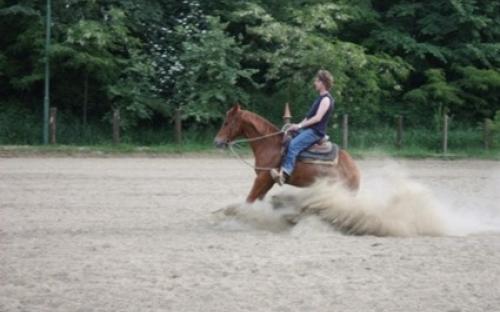 reining stop